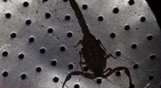 Infestação de escorpiões no bairro do Janga assusta moradores