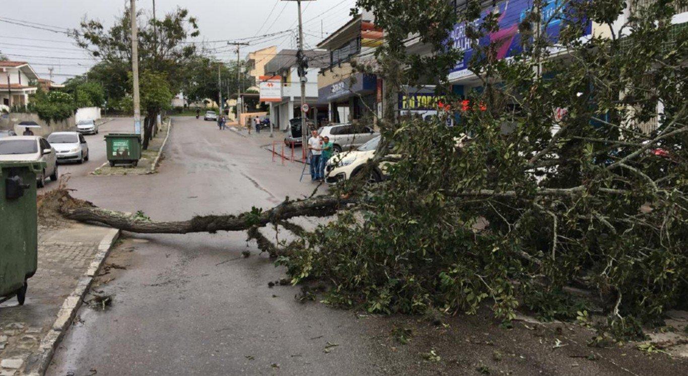 No bairro Petrópolis, uma árvore caiu na Avenida Gregório de Matos