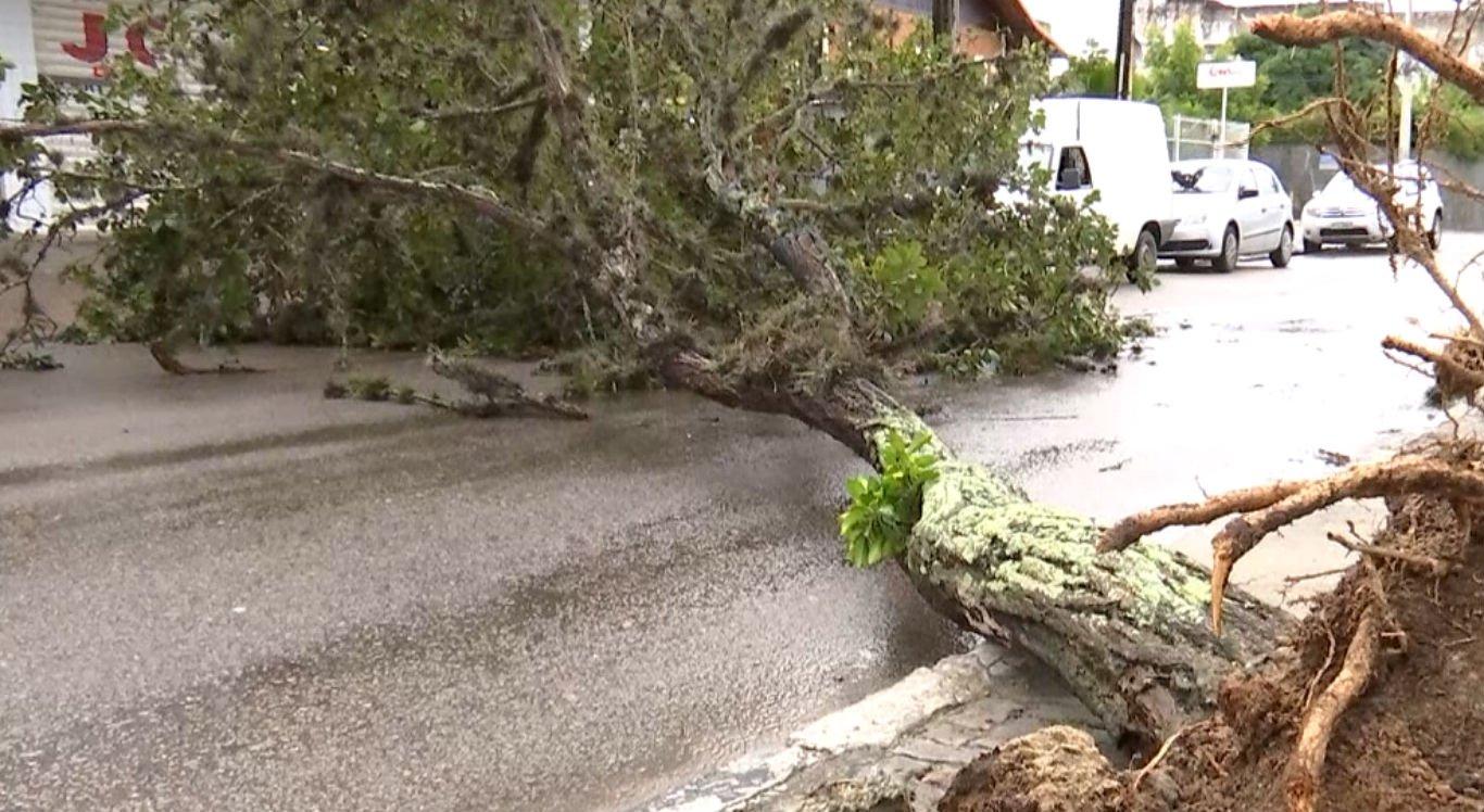 Ventos fortes podem derrubar árvores, como aconteceu em Caruaru
