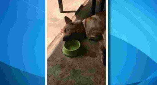 Assista: cachorro preguiçoso viraliza na internet