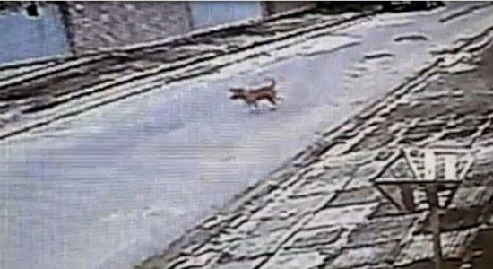 Crueldade: cães e gatos são envenenados na Imbiribeira