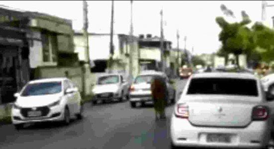 Cavalo solto no meio da estrada e jiboia assusta pedestres; veja