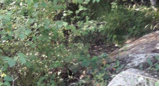 Adolescente de 14 anos é encontrado morto em Bezerros