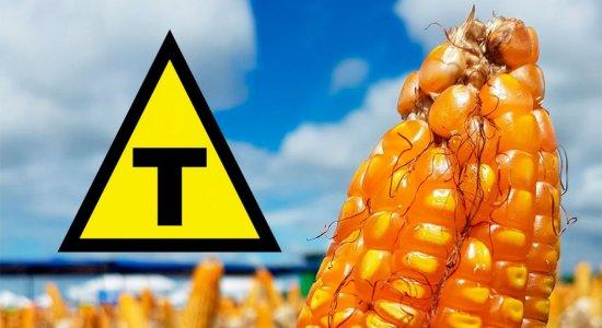 Biólogo explica impacto de alimentos transgênicos na saúde