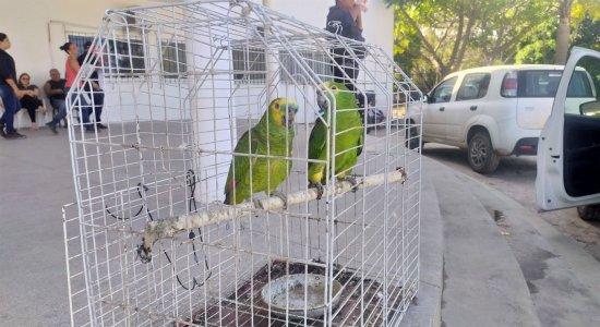 Papagaios são resgatados de cativeiro em Paulista