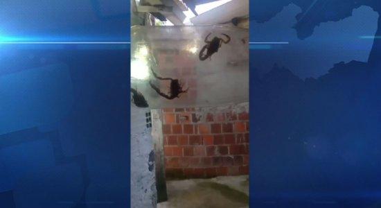 Morador denuncia infestação de escorpiões na Zona Oeste