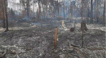 O maior número de focos de incêndios florestais é registrado durante os meses de agosto e setembro