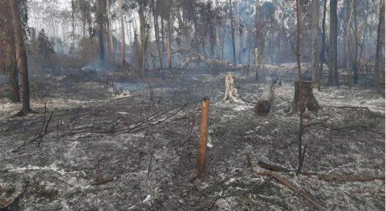 Quatro estados pedem ajuda das Forças Armadas para combate a incêndios