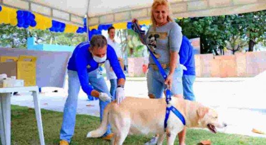 Imunização contra raiva para cães e gatos do Recife vai até setembro