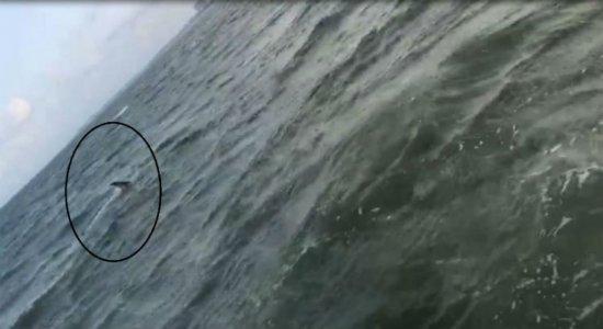 Tubarão é visto na praia de Maria Farinha, no Litoral Norte de PE