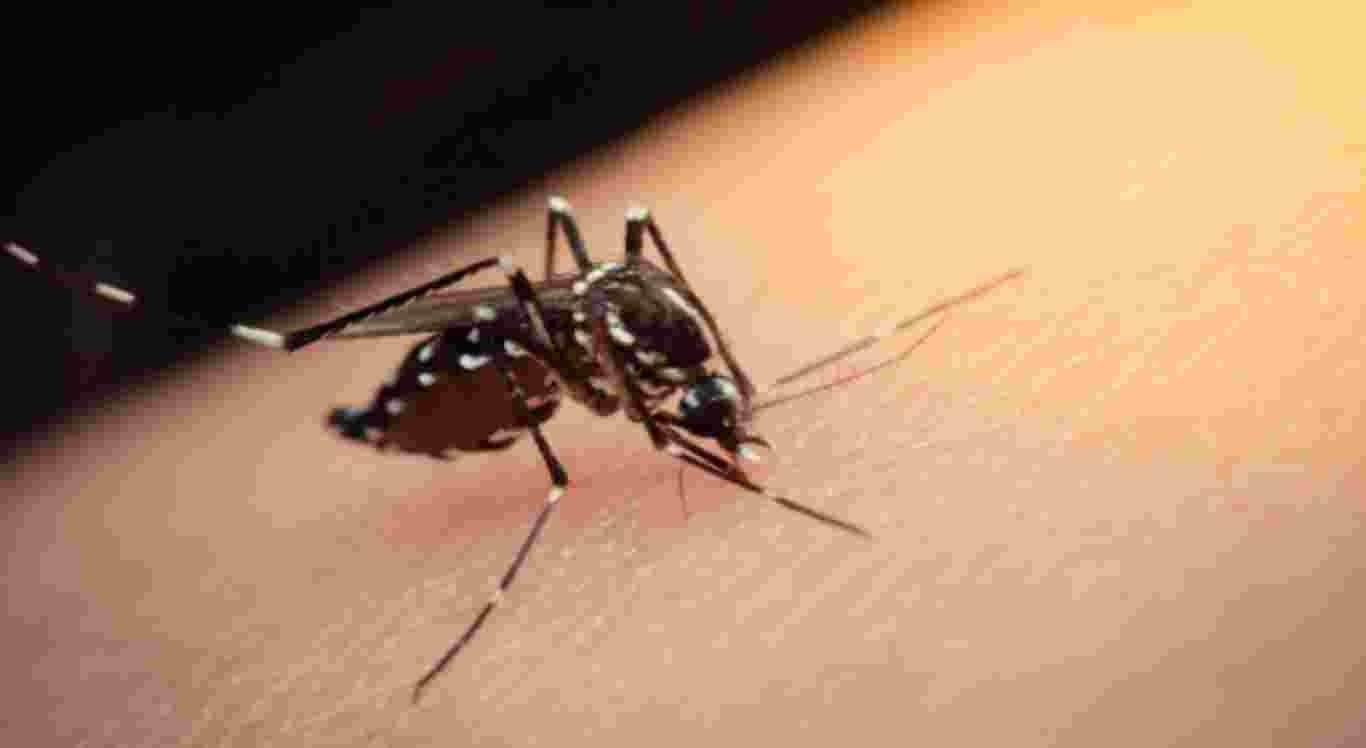 Segundo a Secretaria Municipal de Saúde menina morre suspeita de Dengue.