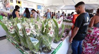 No festival, é possível encontrar orquídeas, rosas, cactos, begônias e bonsais