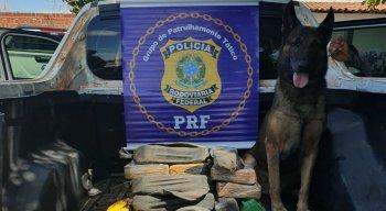 A pasta base de cocaína foi encontrada com o auxílio de um cão farejador da PM-PE