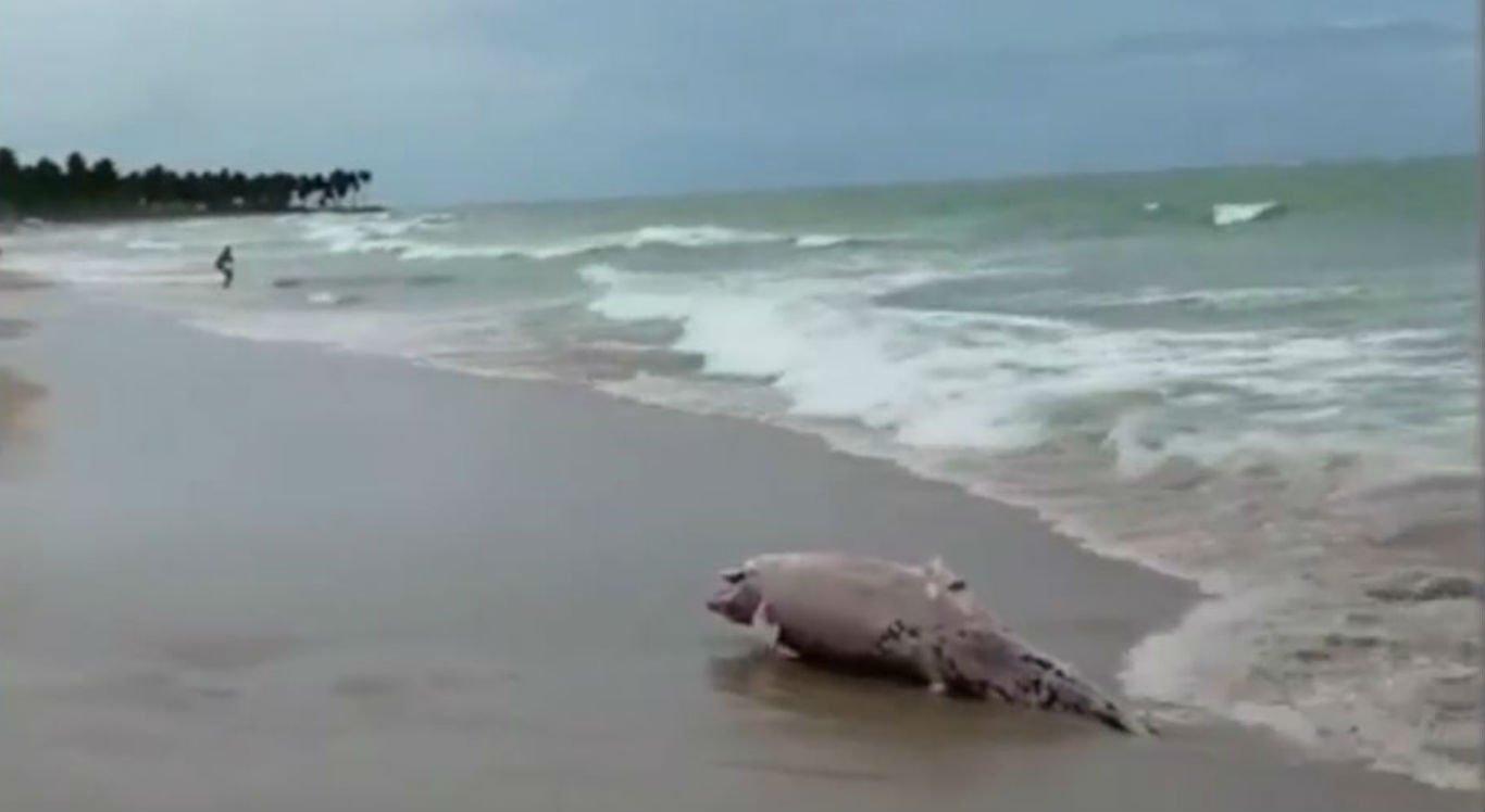 Banhistas filmaram o corpo do golfinho morto na praia