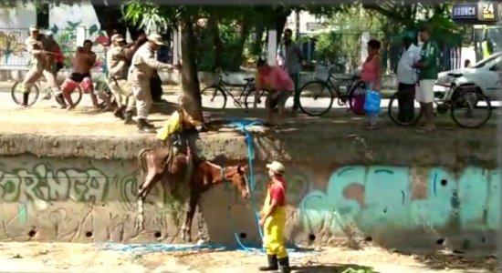 Cavalo cai no canal do Arruda e precisa ser resgatado por bombeiros