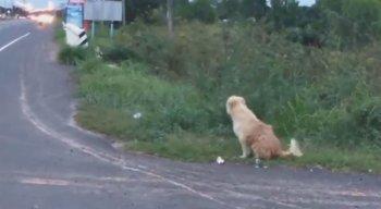 O cachorro se perdeu dos donos durante uma viagem