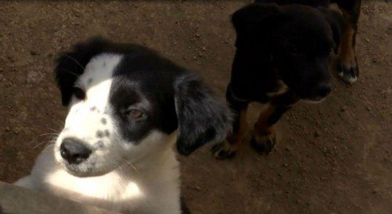 Gatos e cachorros são envenenados em Caruaru
