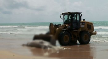 O animal foi encontrado na orla da praia de Boa Viagem