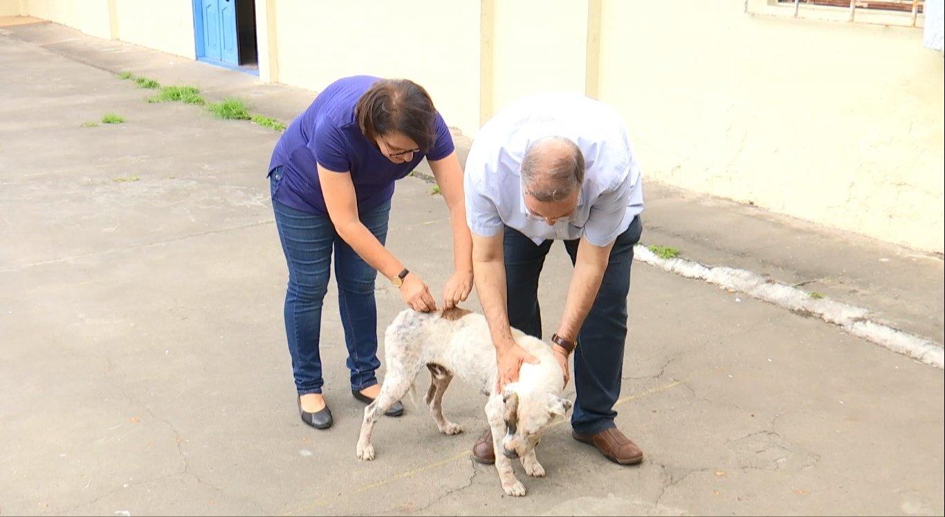 Padre recebe ajuda de veterinária e voluntários