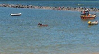 Os cavalos aparecem dentro da água do mar