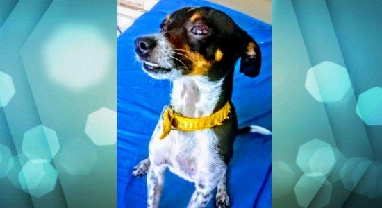 Menino de 7 anos procura cachorro desaparecido no Recife