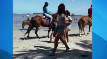 No vídeo, é possível ver os animais passam como se estivessem ''desfilando'' no meio de várias crianças que brincam com pipas