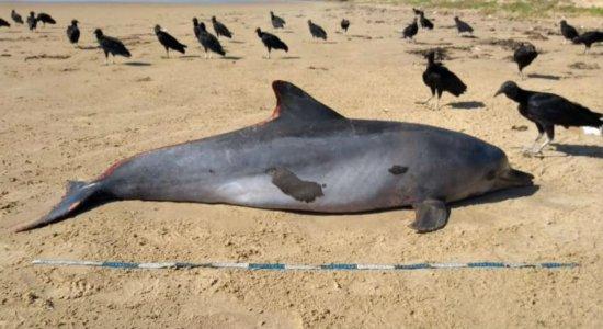 Golfinho com manchas de óleo é achado morto em praia de Alagoas