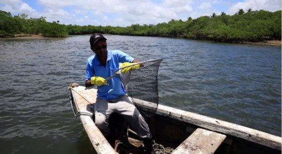 Além de praia, óleo atinge manguezais e prejudica pesca em Rio Formoso