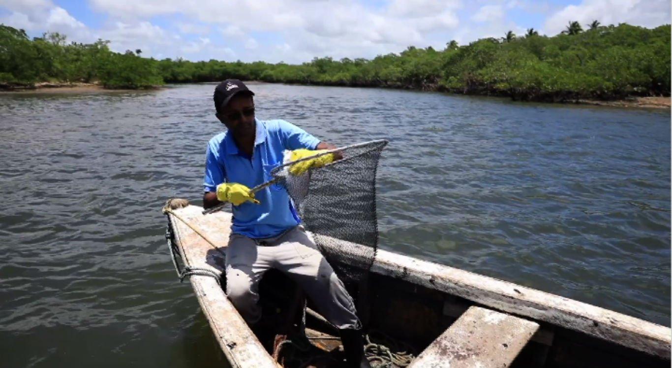 Peixes foram mortos por causa do petróleo