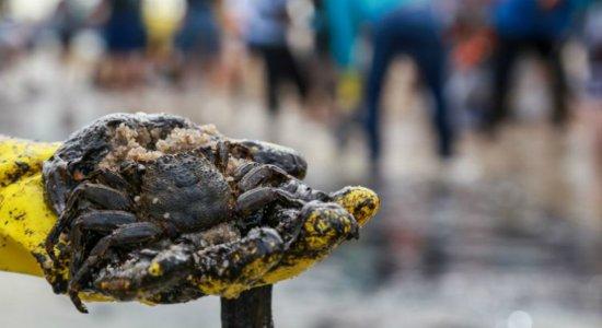 900 toneladas de óleo foram retiradas do Nordeste, segundo a Marinha