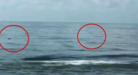 Vídeo: golfinhos aparecem na Praia de Boa Viagem, na Zona Sul do Recife