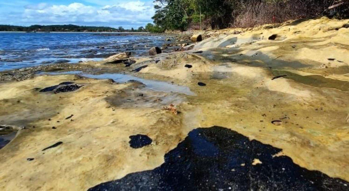 Parte do óleo ficou alojada nos mangues