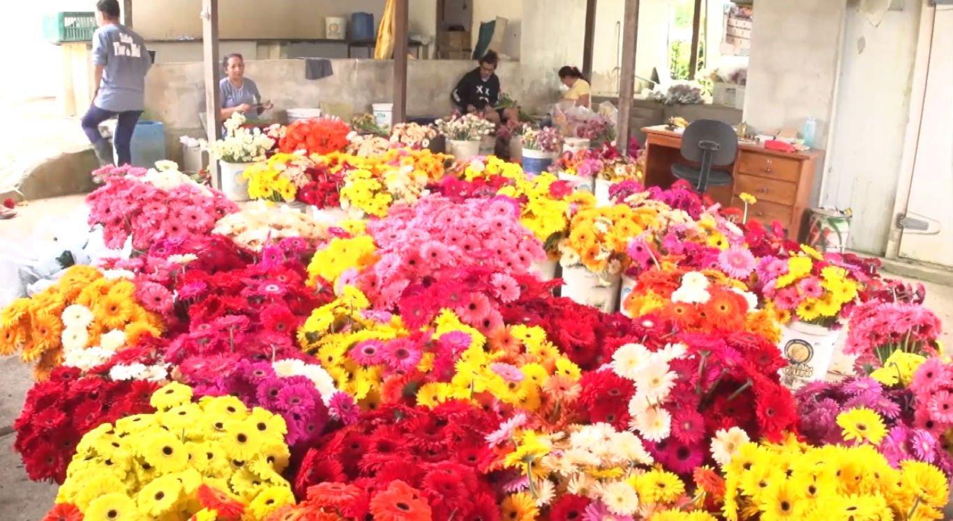 Mais de 300 produtores de flores atuam na zona rural de Gravatá