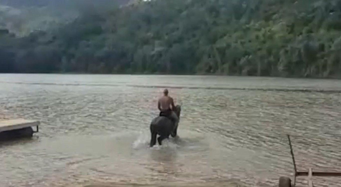 Animal não resistiu e morreu afogado