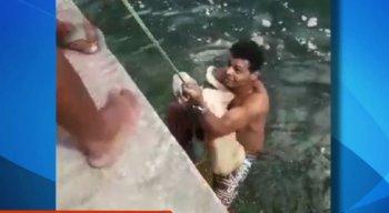 O rapaz nada rapidamente e consegue alcançar o animal