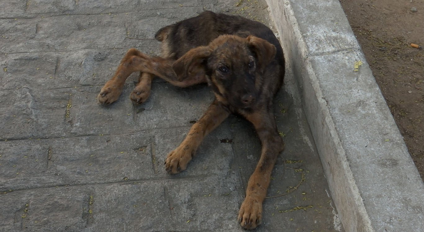 Cadela foi entregue a uma instituição que cuida de animais