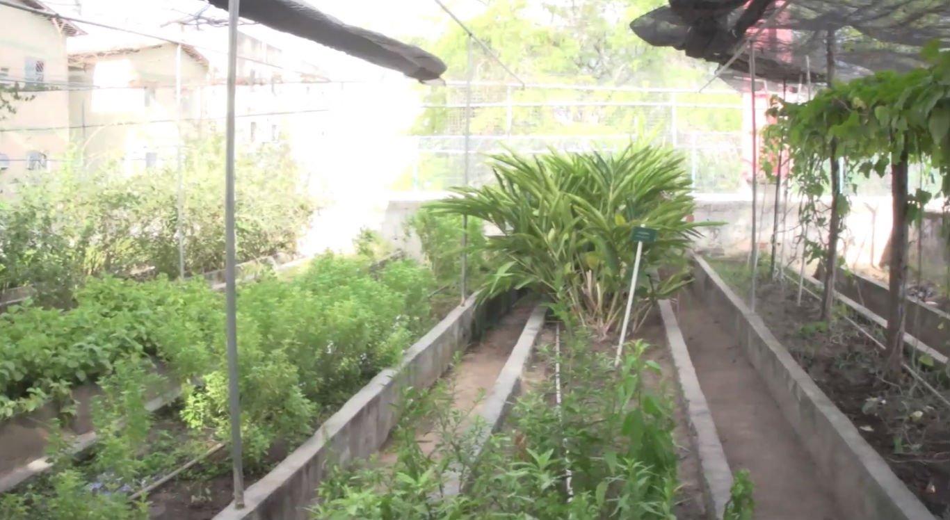 Plantas medicinais estão sendo estudadas em faculdade de Caruaru