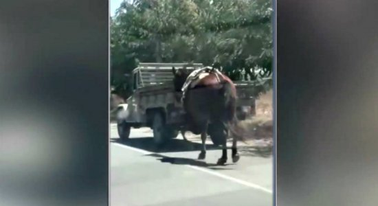 Motorista amarra cavalo a carro e o arrasta por cidades do Agreste