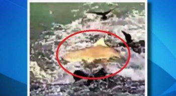 O vídeo foi gravado por um turista na Ilha de Fernando de Noronha
