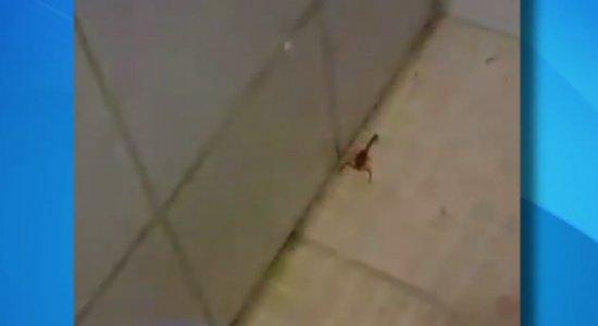 Vídeo mostra baratas e escorpiões dentro do Hospital Oswaldo Cruz