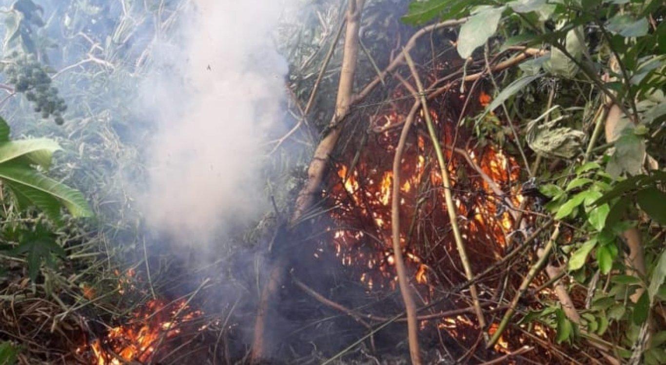 Plantios de maconha são erradicados no Sertão
