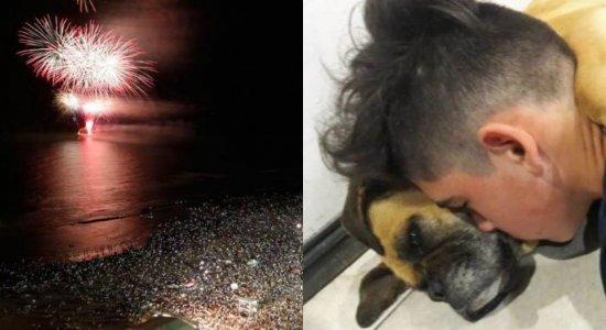 Após cadela sofrer ataque cardíaco, veja como proteger os animais dos fogos de artifício