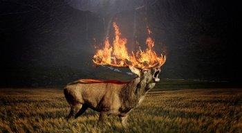 Cerca de 4 milhões de hectares foram destruídos pelas chamas