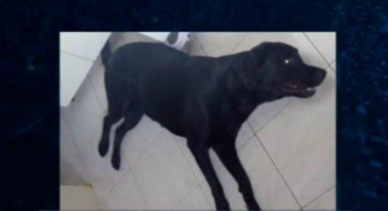 Mais um caso de cadela que morre por causa de fogos de artifício