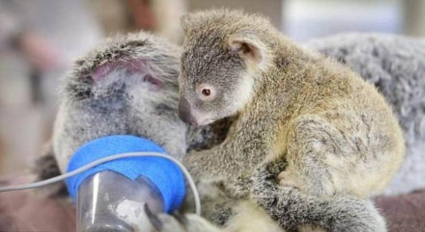 Zoo Wildlife/Divulgação