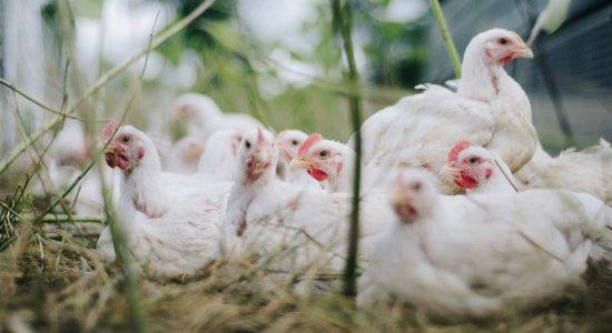 Após China detectar coronavírus em frango importado do Brasil, infectologista faz alerta sobre alimentos
