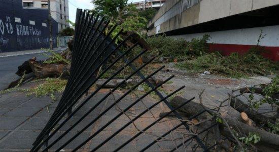 Árvore que rodeia o Arruda provoca danos de até R$ 3 mil no Santa Cruz