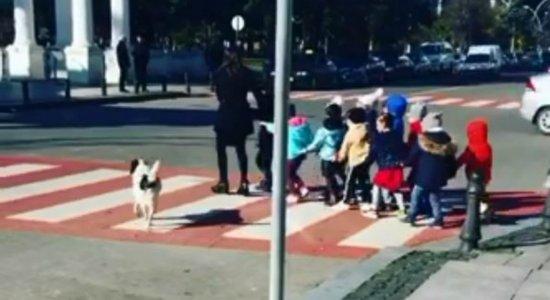 Vídeo: cachorro viraliza após ser ''guarda de trânsito'' e proteger crianças