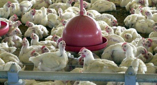 Gripe aviária preocupa China