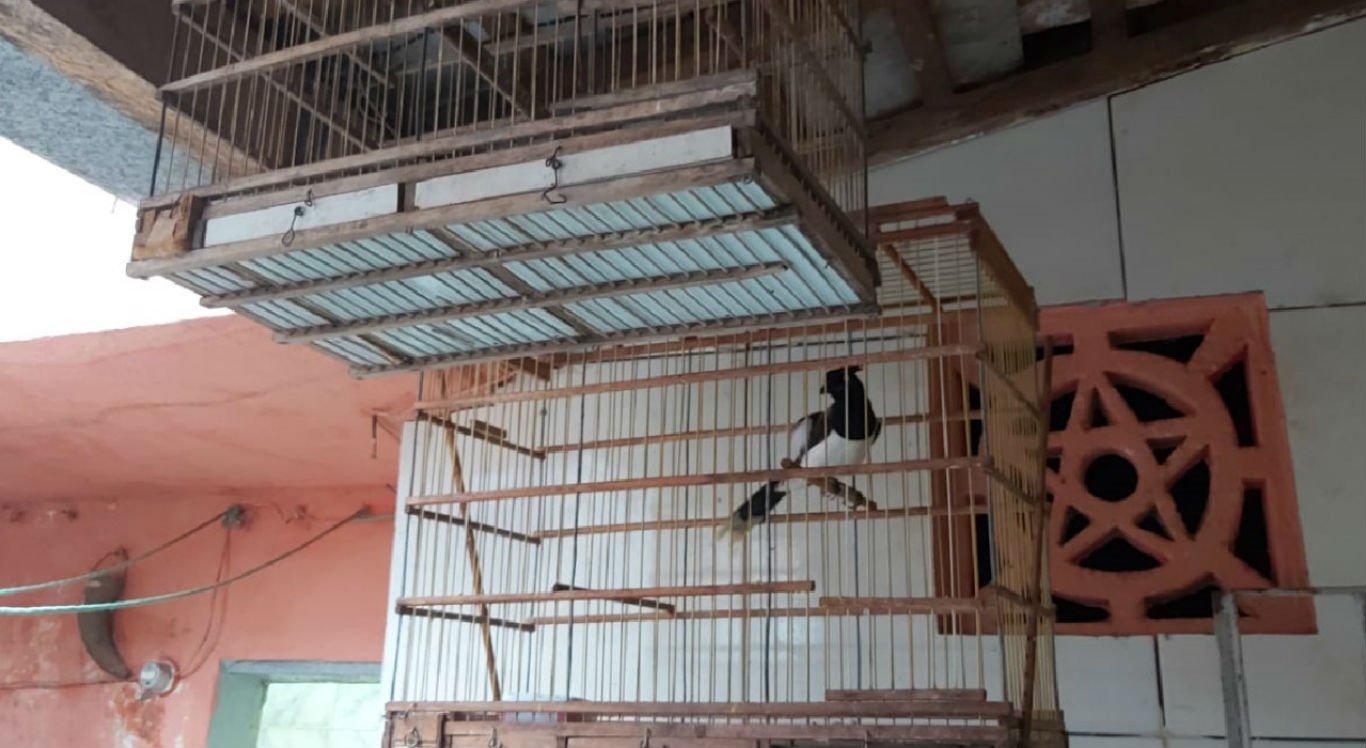 Aves silvestres foram encontradas em um imóvel no bairro Santa Rosa, em Caruaru